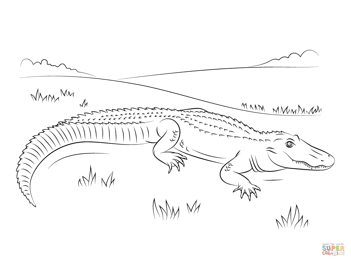 1200x895 Cute American Alligator Coloring Page Free Printable Coloring Pages