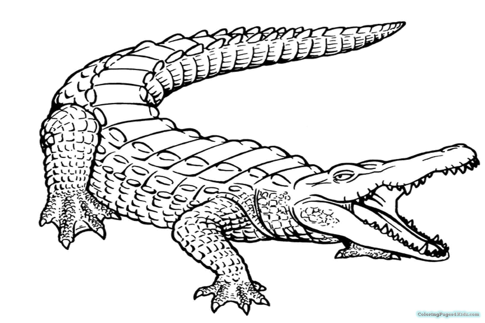 1632x1087 Alligator Cute Coloring Pages Coloring Pages For Kids