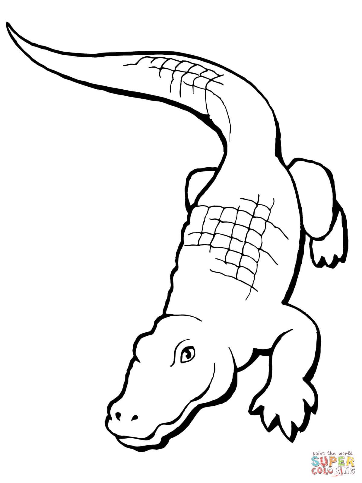 1200x1600 Alligator Drawing