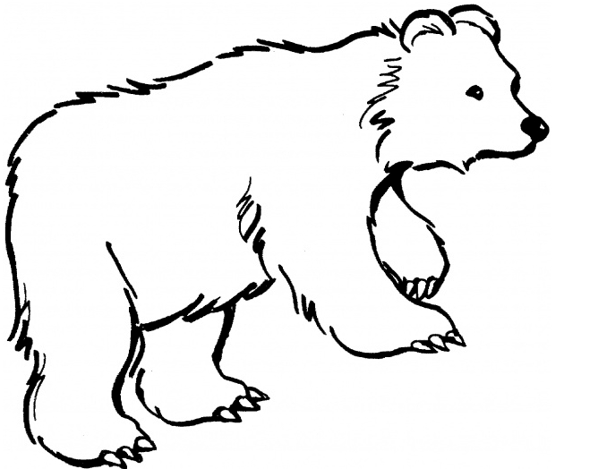678x524 Cute Baby Bear Coloring Pages