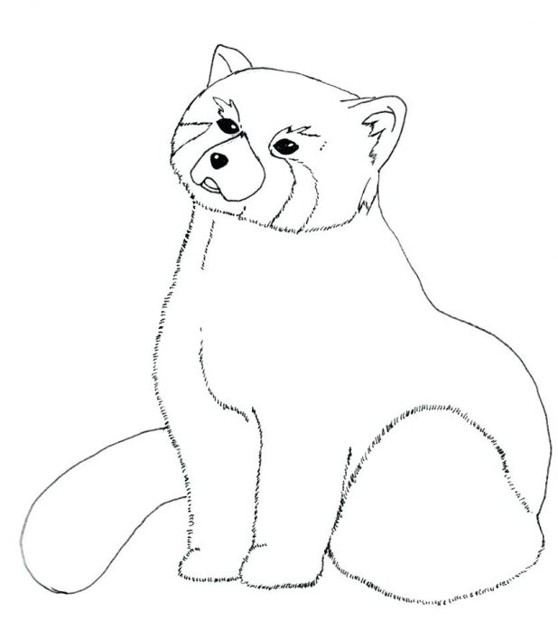 618x708 Red Panda Coloring Page Kung Fu Pages Tai Lung Cute Baby Bear Baby