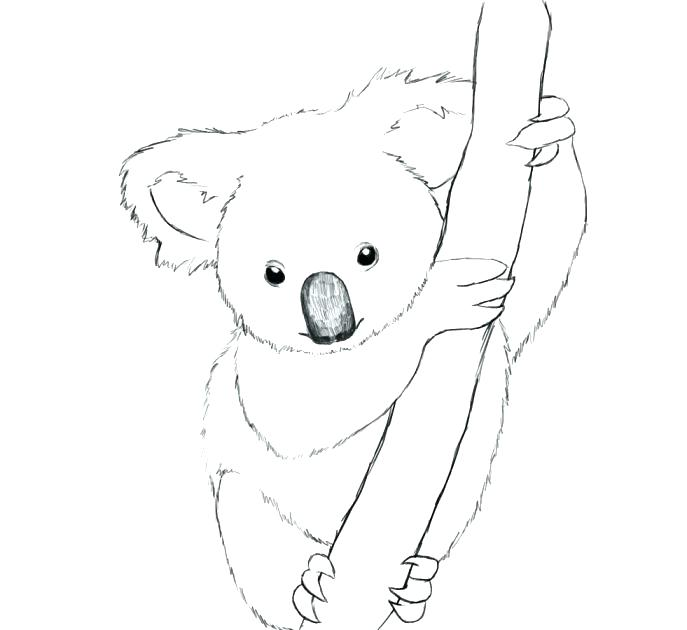 687x630 Cheap Koala Coloring Pages Online Baby Bear Medium Size Of Cute