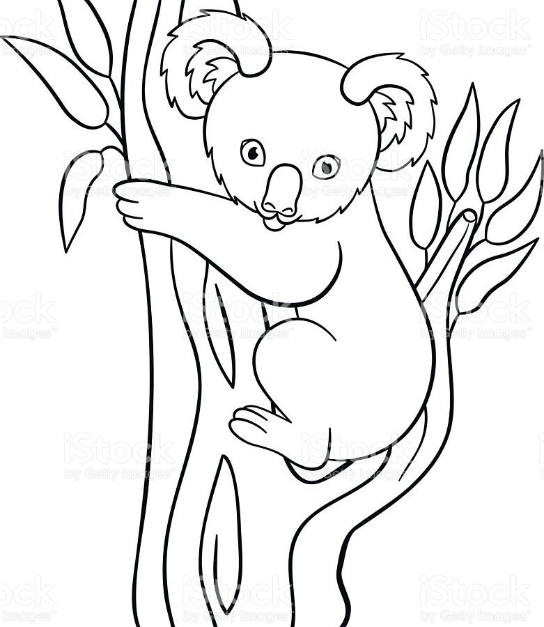 781x900 Coloring Pages Koala To Print And Download Free Printable Animals