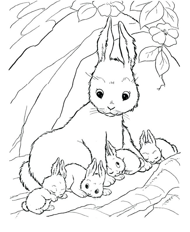 650x796 Baby Bunnies Coloring Pages 3369