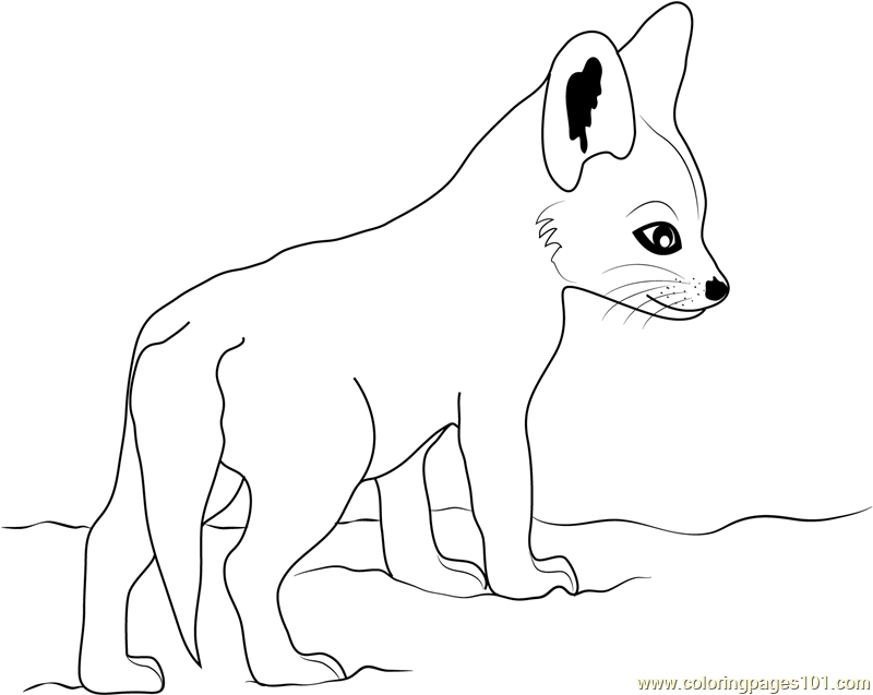 800x637 Baby Fox Coloring Page