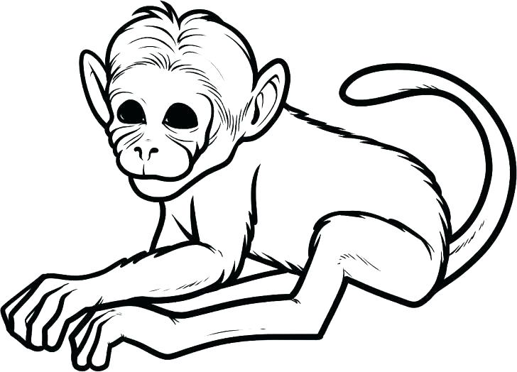 728x524 Awesome Cute Monkey Coloring Pages Best Of Baby Monkeys Printable
