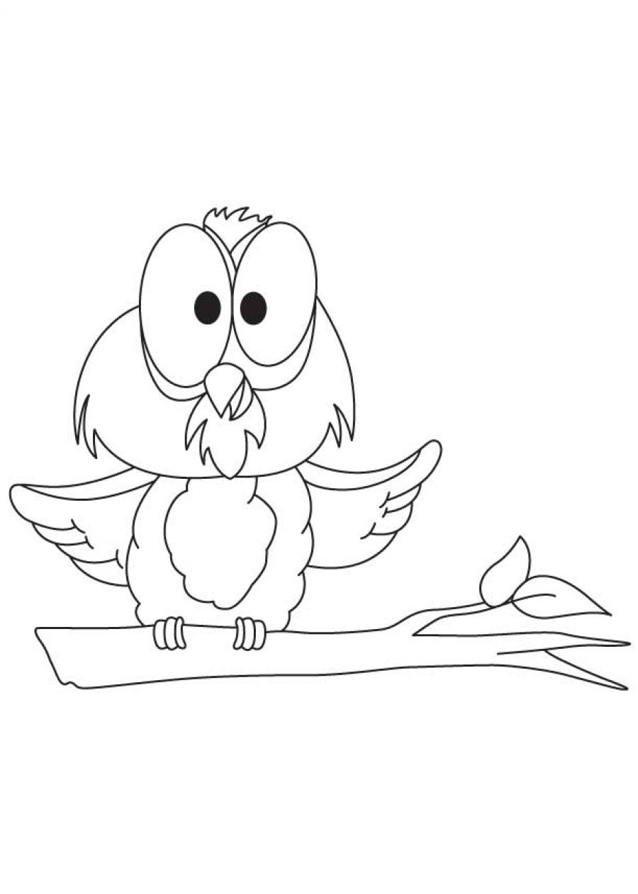 900x1262 Baby Owl Coloring Pages