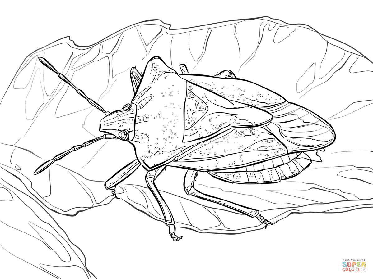1199x899 Stink Bug Coloring Page Free Printable Coloring Pages