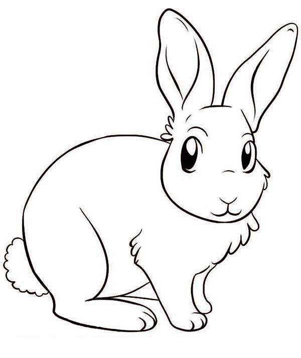 Cute Bunny Drawing