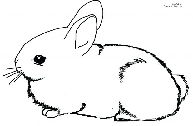 618x403 Coloring Cool Rabbit Pictures To Color. Cute Bunny Rabbit
