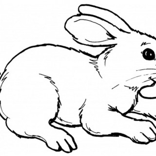 320x320 Tag For How To Draw A Really Cute Bunny Cute Bunny Drawing How