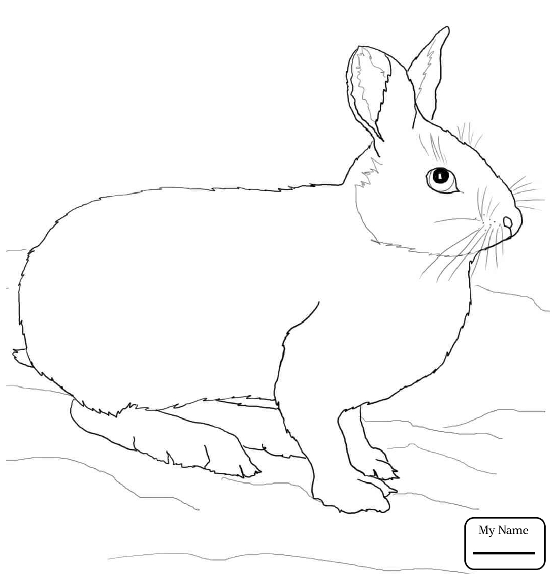 1093x1142 Cartoon Rabbit Rabbits Mammals Rabbits Coloring Pages For Kids