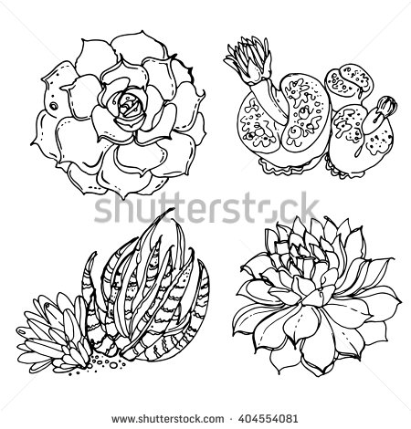 450x470 Stock Vector Succulents Cacti Line Drawn On A White Background