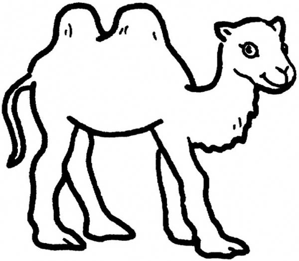 cute camel drawing at getdrawingscom free for personal