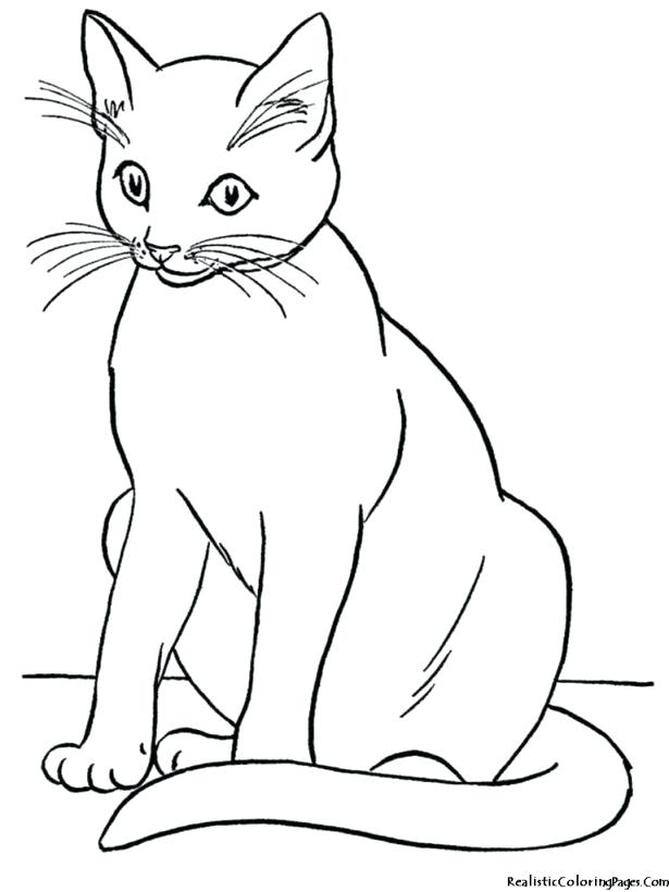 615x820 Cute Cat Coloring Pages Medium Size Of Pictures To Colour
