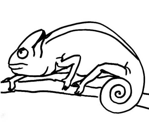600x534 Chameleon Coloring Pages Free Printable Chameleon Coloring Pages