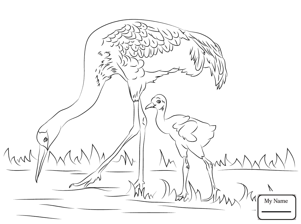 1253x934 Birds Sandhill Crane With Cute Chick Coloring Pages For Kids