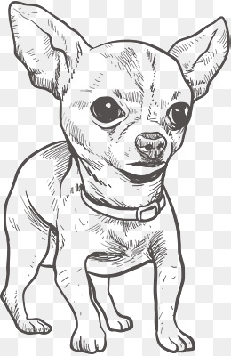 260x400 Chihuahua Png, Vectors, Psd, And Icons For Free Download Pngtree