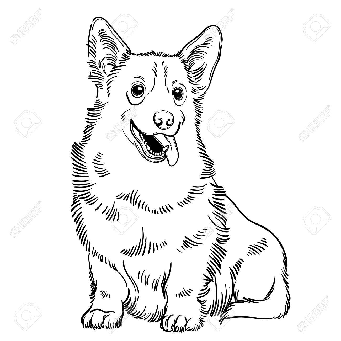 1300x1300 Cute Vector Illustration With Welsh Corgi. Home Dog. Perfect