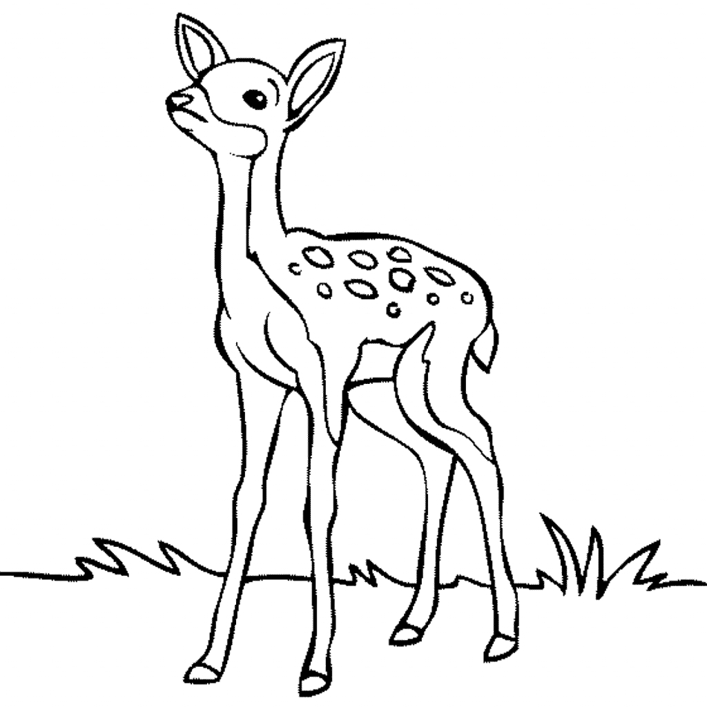 1024x1024 Cartoon Deer Drawings Cute Deer Fawn Cartoon Vector Line Stock