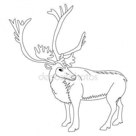 450x450 Cute Deer Reindeer Caribou Cartoon Caracter. Isolated On a White