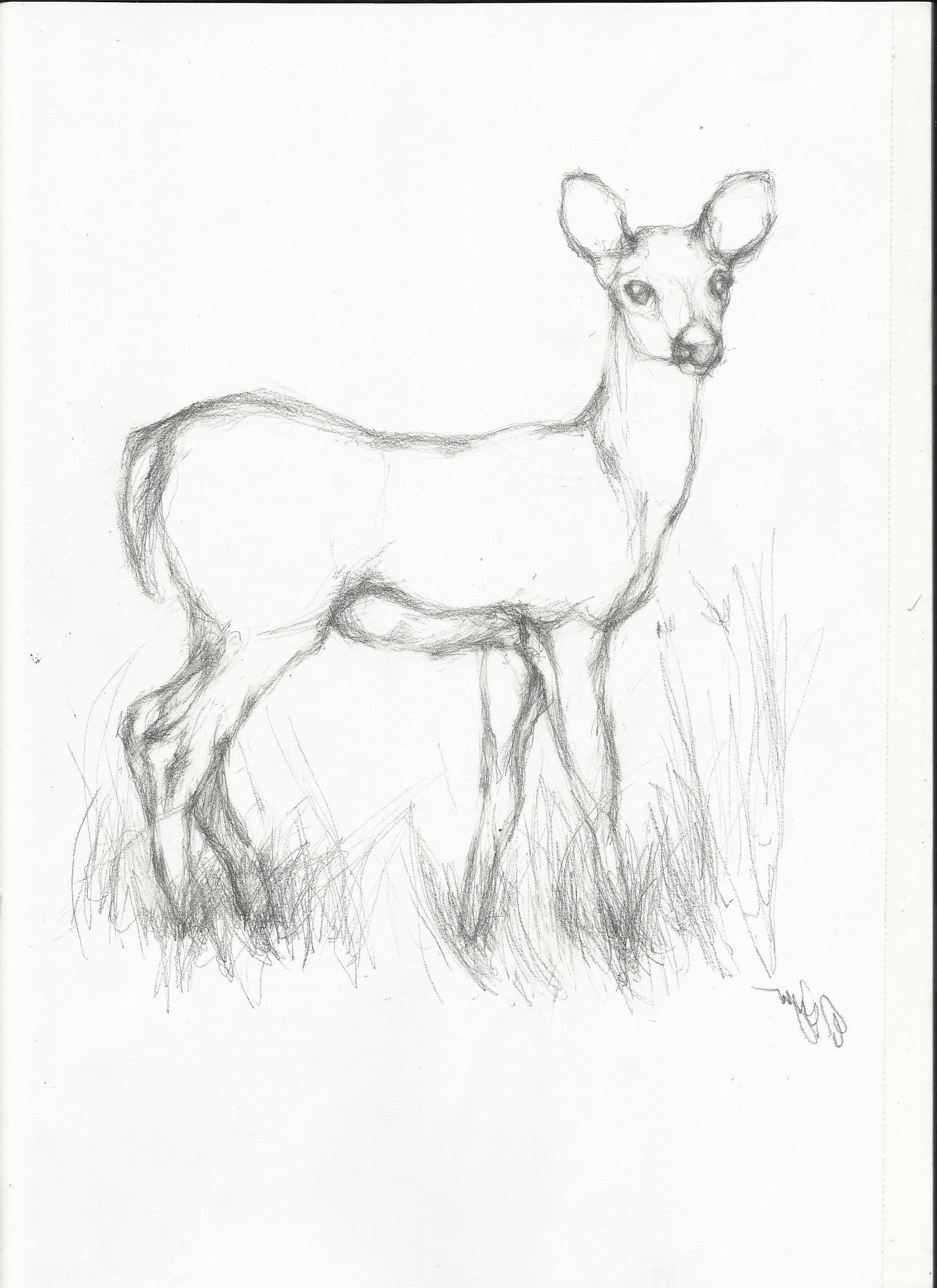 Cute Deer Drawing at GetDrawings | Free download