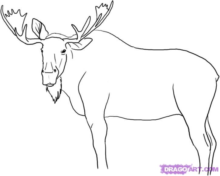 725x581 cute baby animals to draw step by step deer archives drawing art