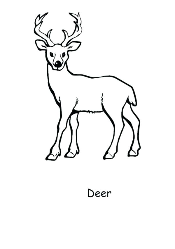600x852 Baby Deer Coloring Pages Baby Deer Coloring Pages D Is For Deer