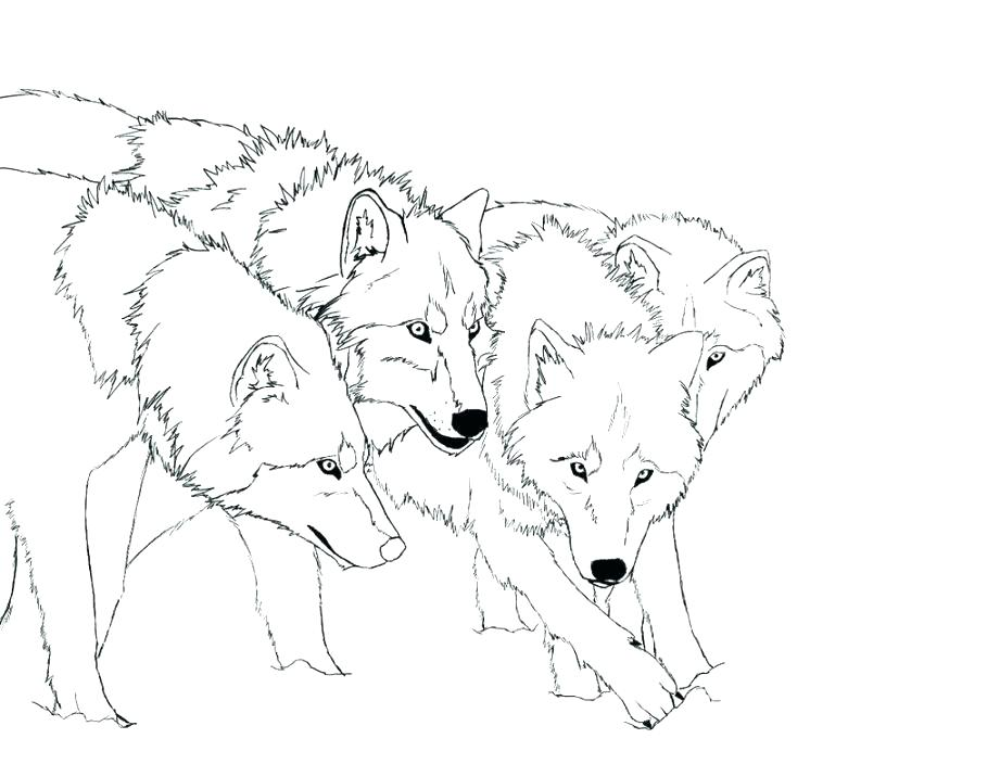 921x704 Cute Wolf Coloring Pages Remarkable Baby Wolf Coloring Pages New