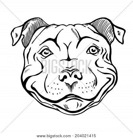 450x470 Pit Bull Smiling Dog Face Portrait Vector Amp Photo Bigstock