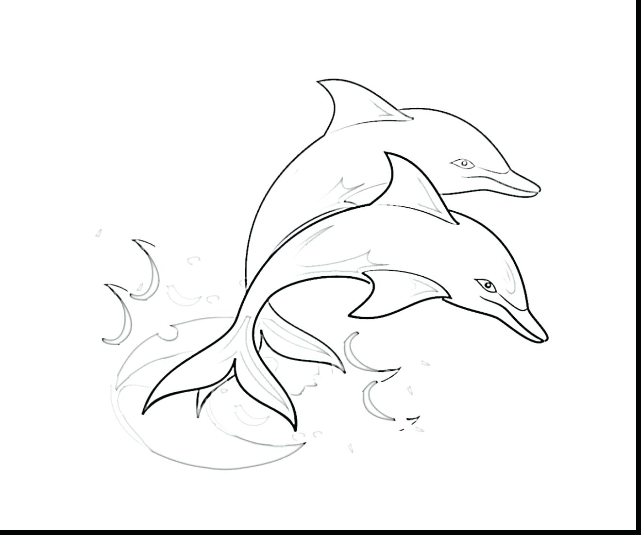 Cute Dolphin Drawing at GetDrawings.com | Free for personal use Cute ...