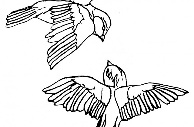 640x420 Tag For Cute Love Birds Drawings Related Pictures Birds Cute