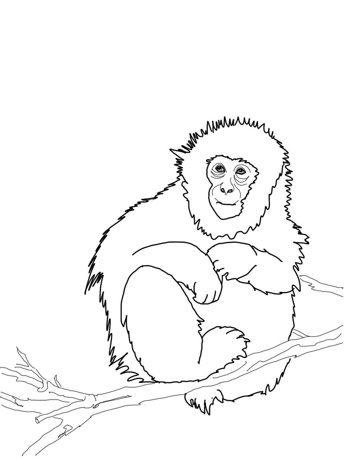 1200x1600 Free Printable Monkey Coloring Pages For Kids