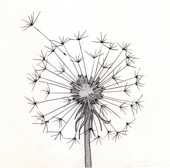 564x558 Dandelion Sketch Silhouette Cameo Dandelions