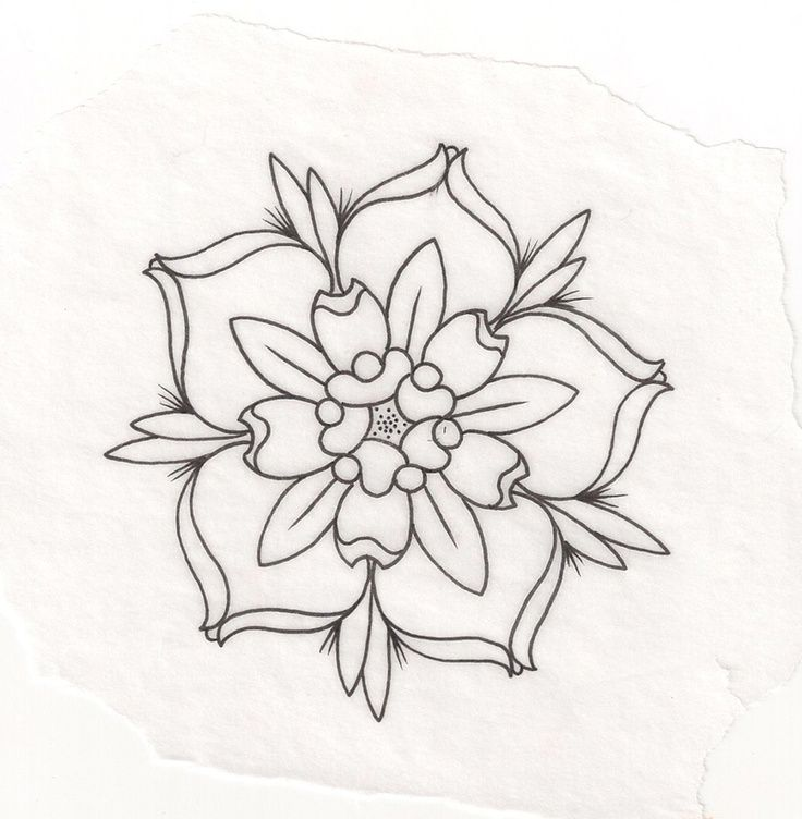 736x752 Drawn Vintage Flower Tumblr Art