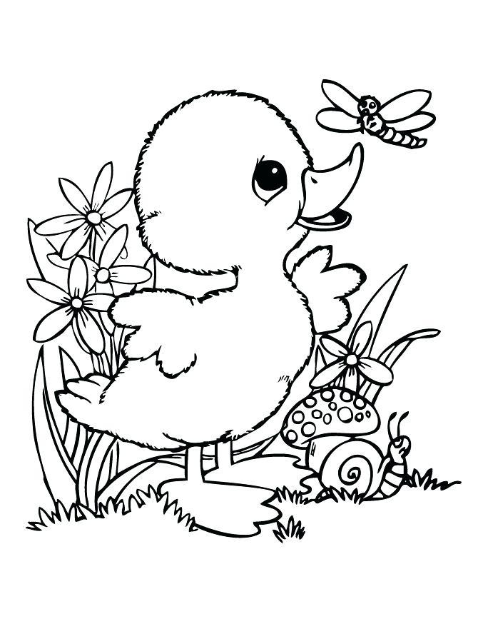 670x867 Duck Coloring Pages 25076