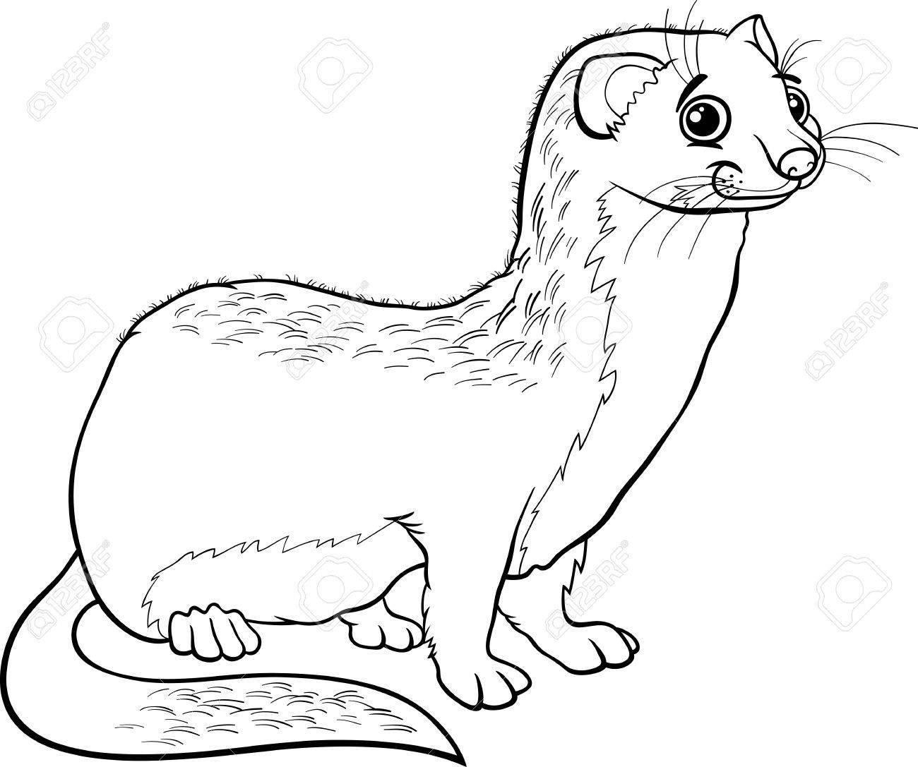 Cute Ferret Drawing at GetDrawings | Free download
