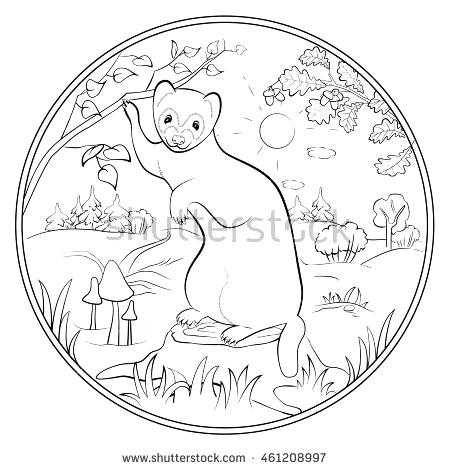 450x470 Ferret Coloring Pages Adult Page For Anti Stress Art