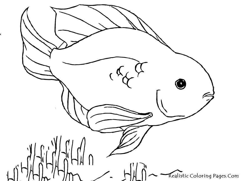 1024x768 Tropical Fish Coloring Pages