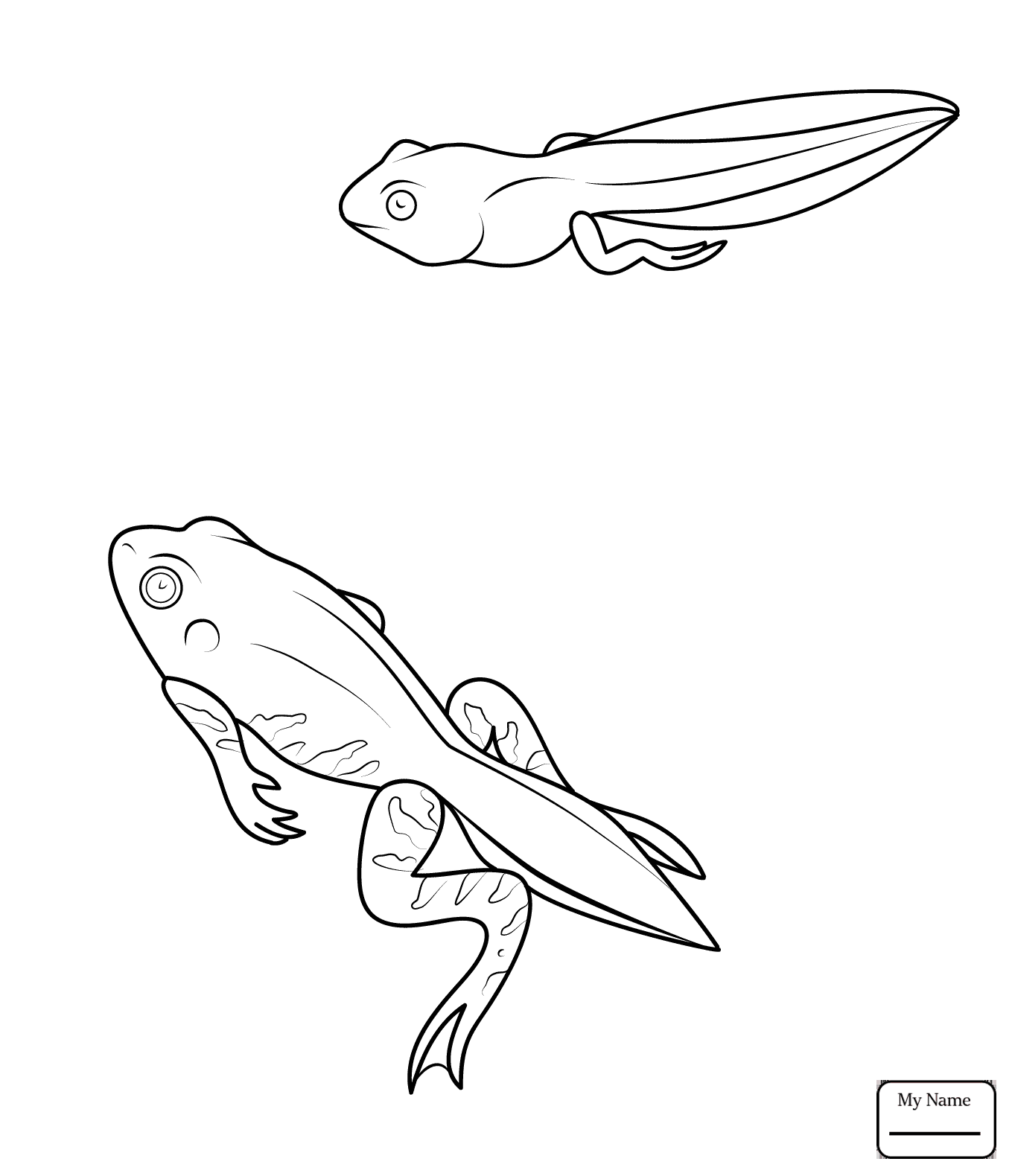 1359x1580 Frog 3 Amphibian Frogs Coloring Pages