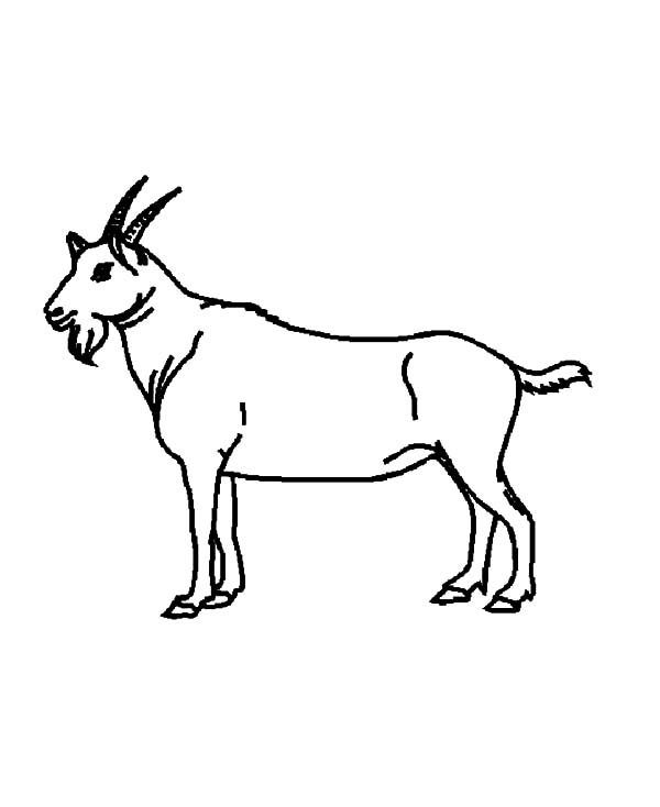 600x734 Drawing Goat Coloring Pages Color Luna