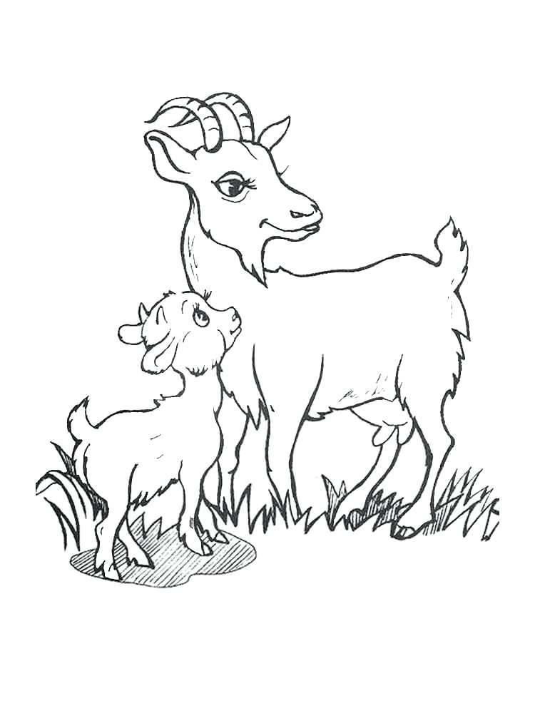 750x1000 Goat Coloring Sheet Young Pages Face