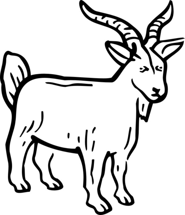 599x693 Billy Goat Clipart Line Drawing