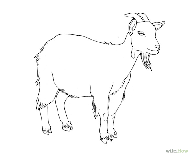 670x548 Image Result For How To Draw A Goat Step By Step Art
