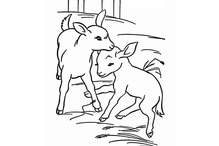 720x480 Cute Baby Goat Coloring Page Colouring To Beatiful Print Image