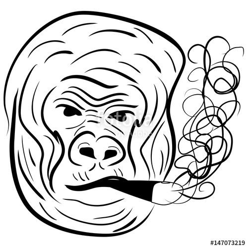 500x500 Gorilla Portrait