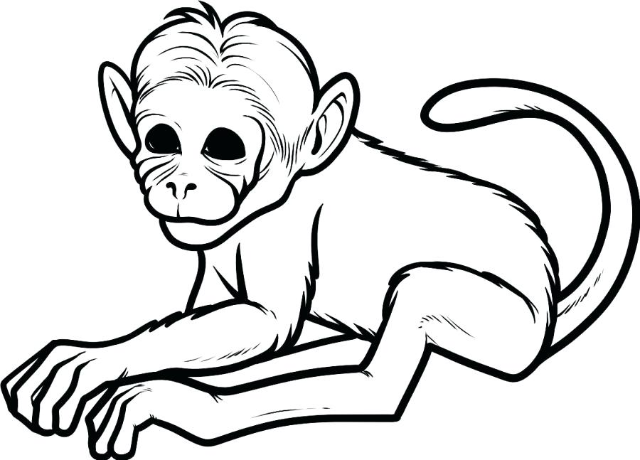 900x647 Cheap Monkey Printable Coloring Pages Online Baby Free Full Size