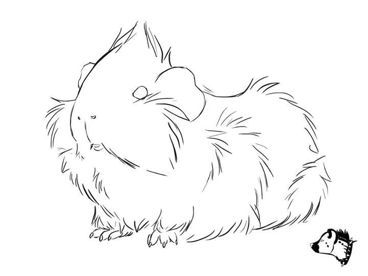 Cute guinea pig drawing