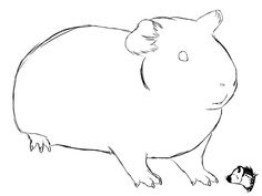 236x177 Groaning Guinea Pig Coloring Pages Download Free Groaning Guinea
