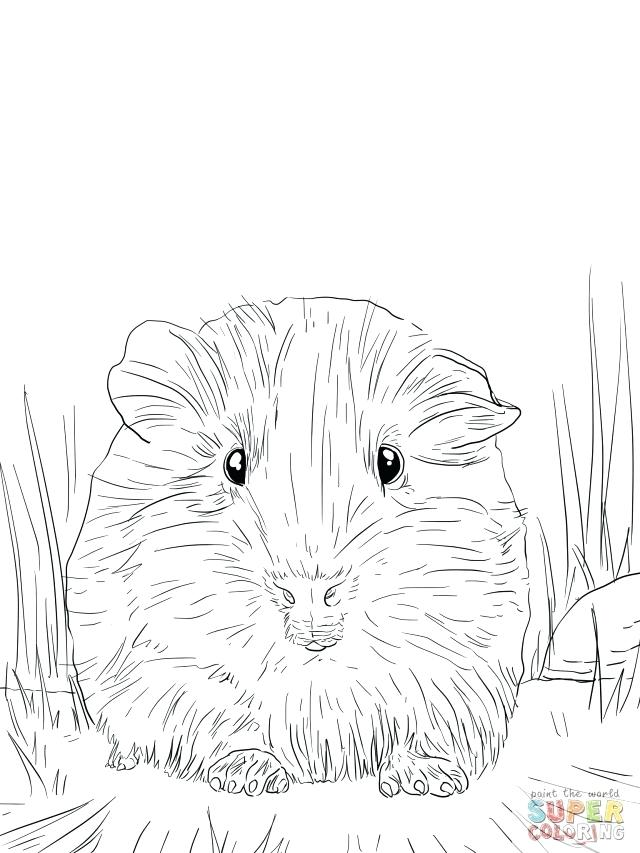 640x853 Guinea Pig Coloring Page Amazing Guinea Pig Coloring Pages About